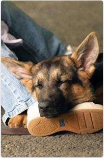sensory-dog